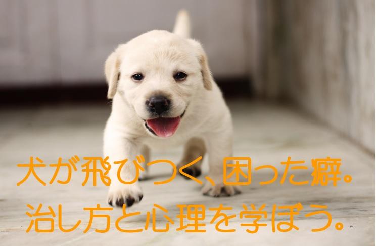 顔にとびかかってくるのはちょっと苦手。犬が飛びつく心理を学ぼう。