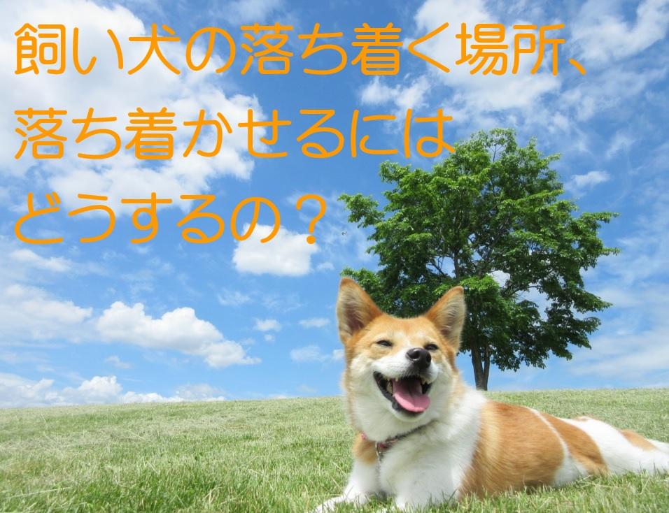 飼い犬が落ち着く場所、落ち着かせるにはどうするの?