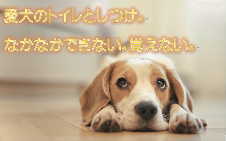 愛犬のトイレのしつけ。なかなかできない、覚えない。しつけ直しは難しい?