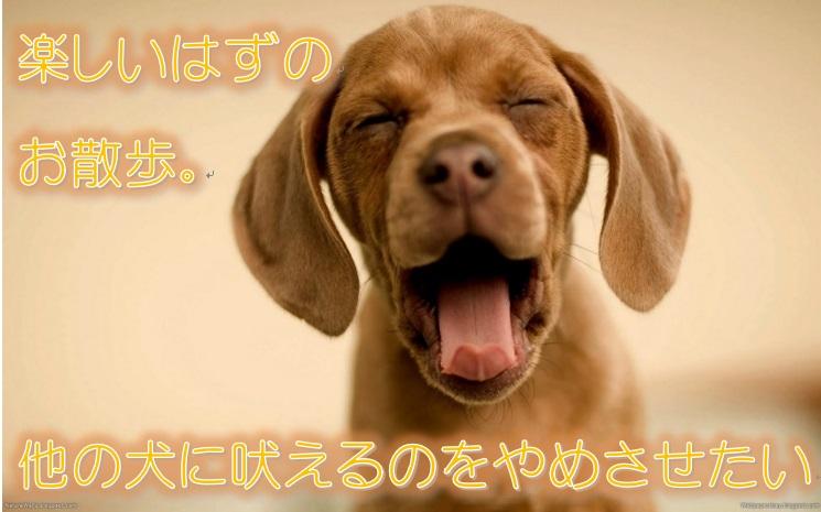 楽しいはずのお散歩。他の犬に吠えるのをやめさせたい!