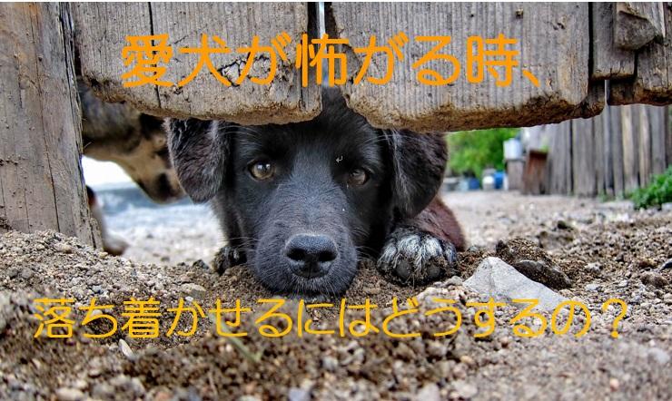 愛犬が怖がる時、落ち着かせるにはどうするの?怯える犬の接し方。