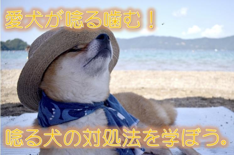 愛犬が唸る噛む!唸る犬の対処法を学ぼう。