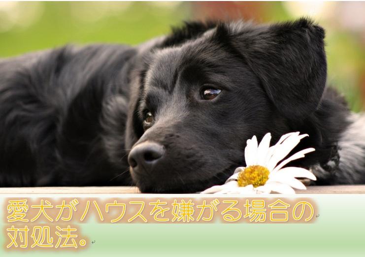 愛犬がハウスを嫌がる場合の対処法。突然入らなくなった場合はどうすべき?