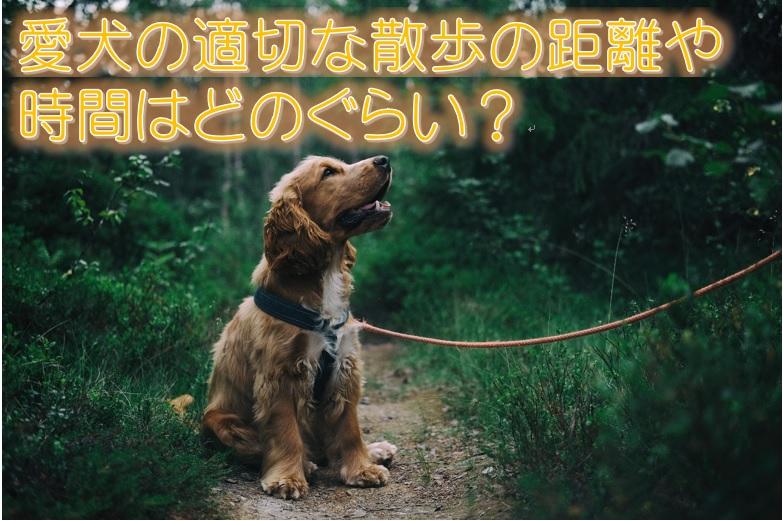 愛犬の適切な散歩の距離や時間はどのぐらい?小型犬は散歩はいらない?!