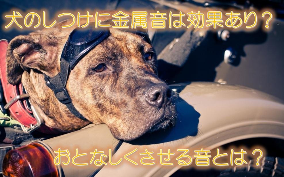 犬のしつけに金属音は効果あり?おとなしくさせる音とは?