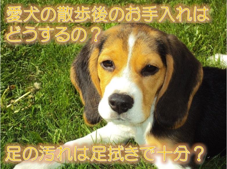 愛犬の散歩後のお手入れはどうするの?足の汚れは足拭きで十分?
