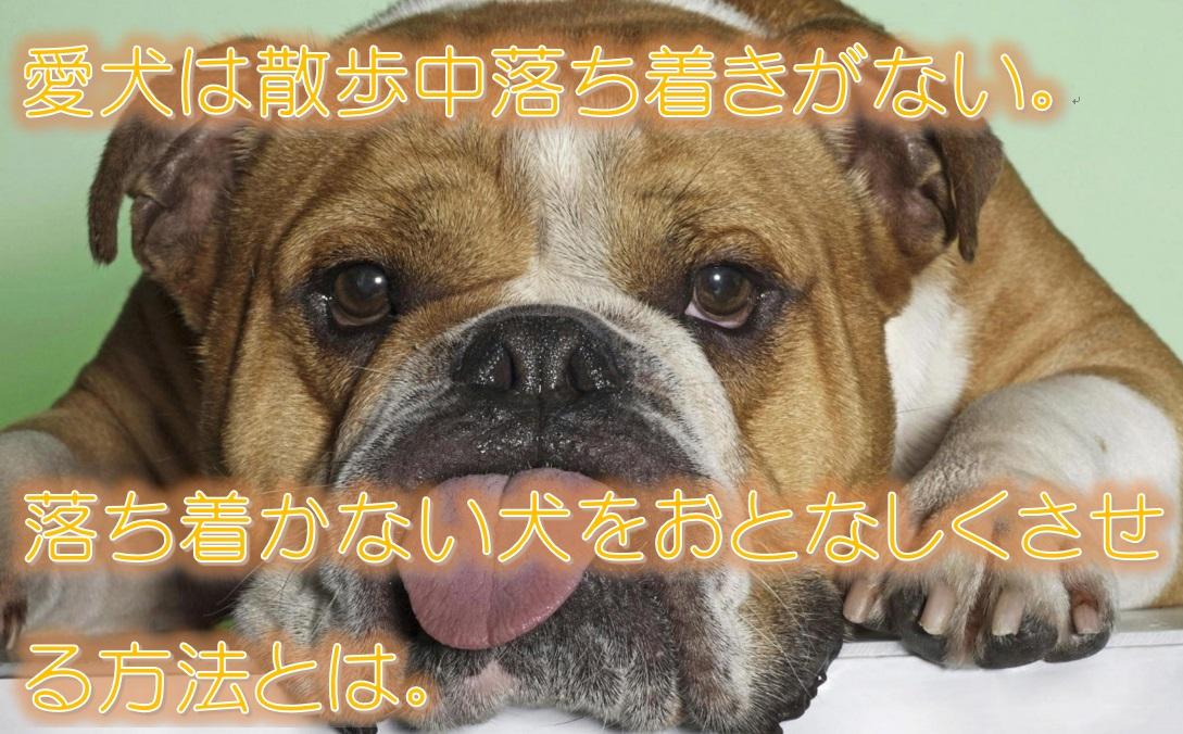 愛犬は散歩中落ち着きがない。落ち着かない犬をおとなしくさせる方法とは。