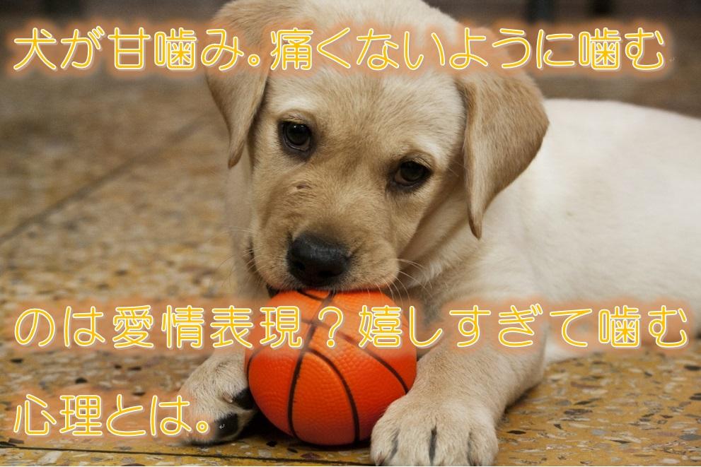 犬が甘噛み。痛くないように噛むのは愛情表現?嬉しすぎて噛む心理とは