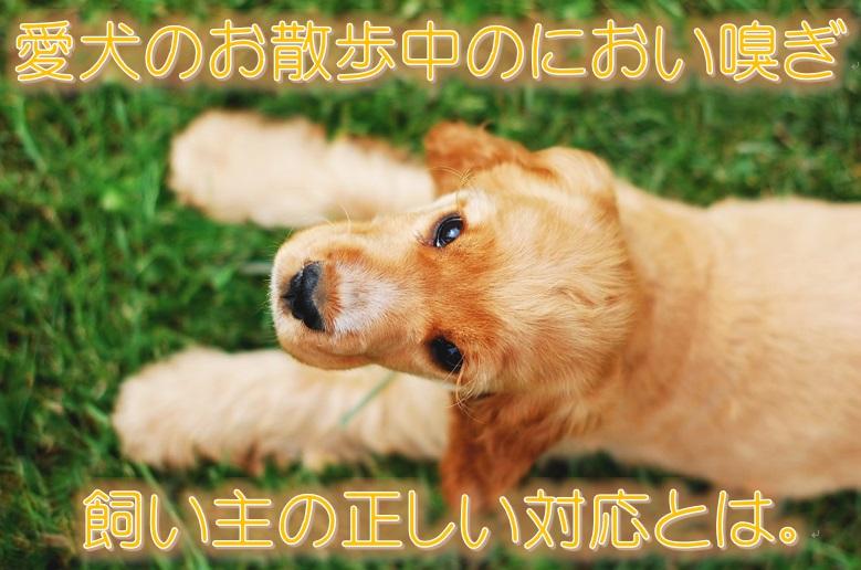 愛犬のお散歩中のにおい嗅ぎ。飼い主の正しい対応とは。