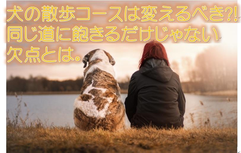 犬の散歩コースは変えるべき?!同じ道に飽きるだけじゃない欠点とは。