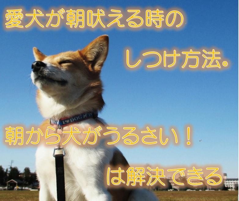 愛犬が朝吠える時のしつけ方法。朝から犬がうるさい!は解決できる。