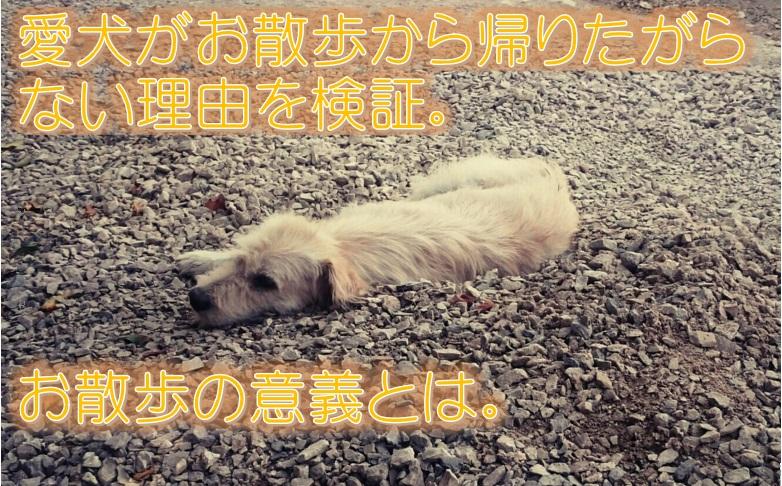 愛犬がお散歩から帰りたがらない理由を検証。お散歩の意義とは。