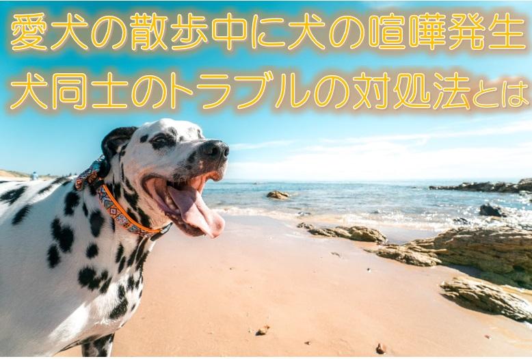 愛犬の散歩中に犬の喧嘩発生。犬同士のトラブル対処法とは。