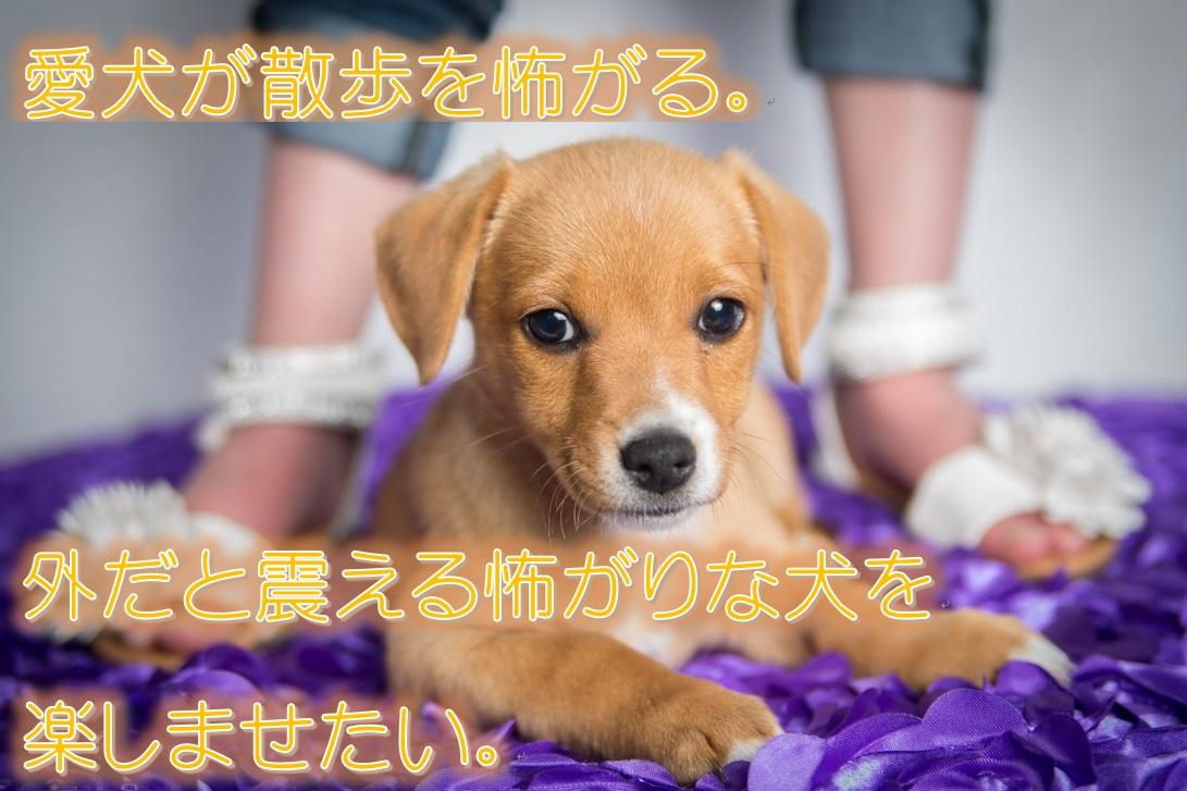 愛犬が散歩を怖がる。外だと震える怖がりな犬を楽しませたい!