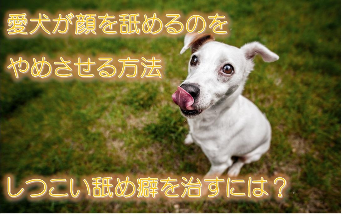 愛犬が顔を舐めるのをやめさせる方法。しつこい舐め癖を治すには?