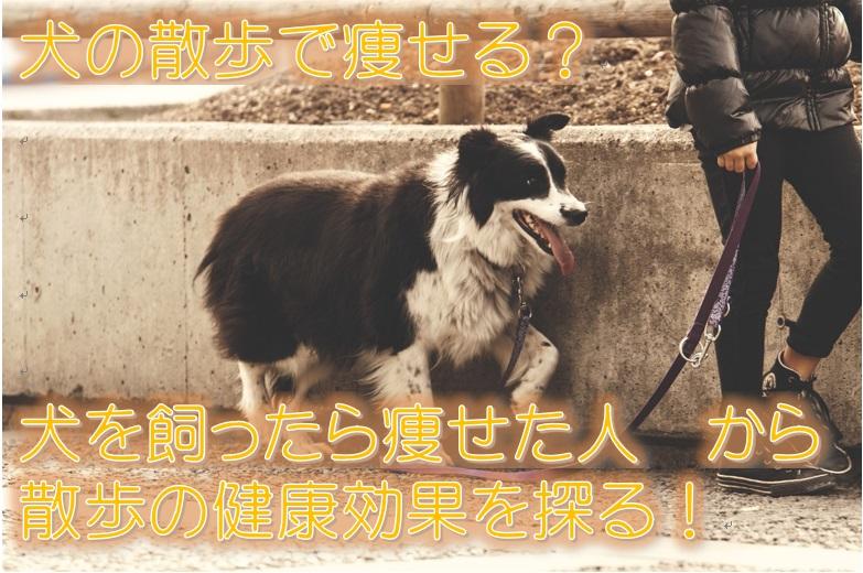 犬の散歩で痩せる?犬を飼ったら痩せた人から散歩の健康効果を探る!