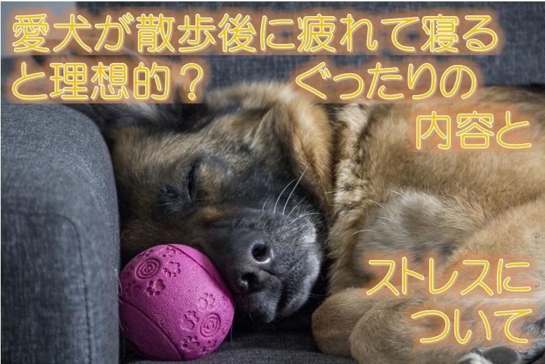 愛犬が散歩後に疲れて寝ると理想的?ぐったりの内容とストレスについて
