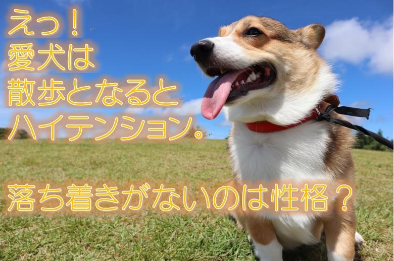 えっ!愛犬は散歩となるとハイテンション。落ち着きがないのは性格?