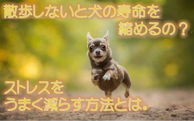 散歩しないと犬の寿命を縮めるの?ストレスをうまく減らす方法とは。