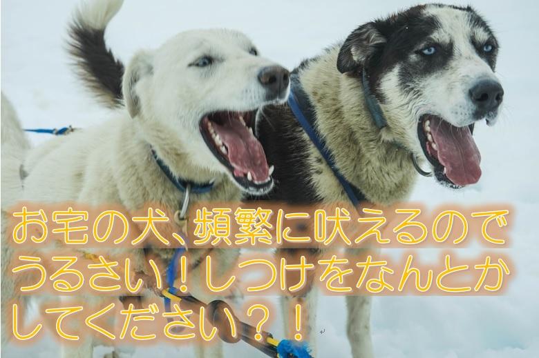お宅の犬、頻繁に吠えるのでうるさい!しつけをなんとかしてください?!