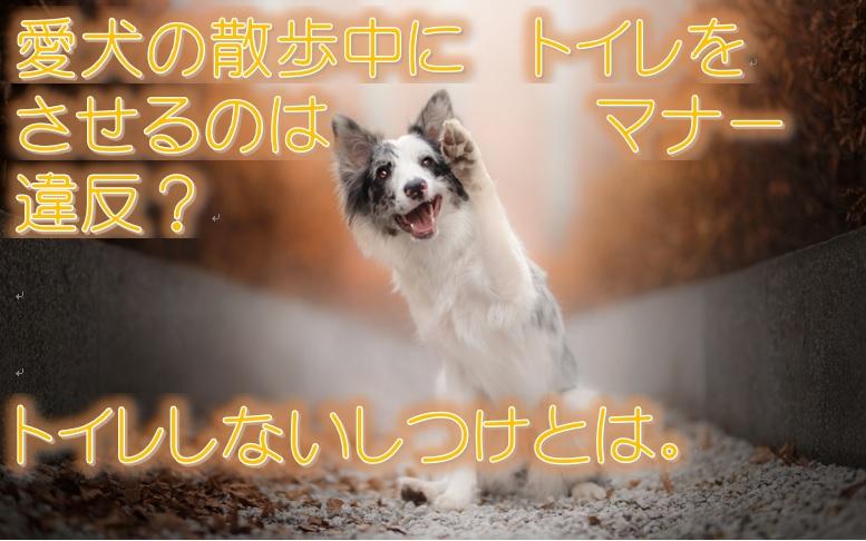 愛犬の散歩中にトイレをさせるのはマナー違反?トイレしないしつけとは。