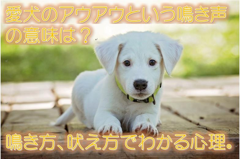 愛犬のアウアウという鳴き声の意味は?鳴き方、吠え方でわかる心理。