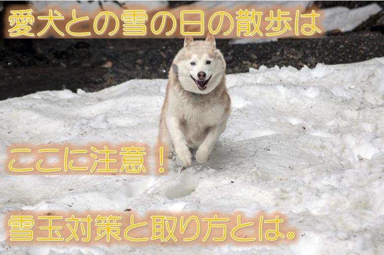 愛犬との雪の日のお散歩はここに注意!雪玉対策と取り方とは。