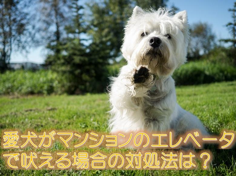 愛犬がマンションのエレベーターで吠える場合の対処法は?