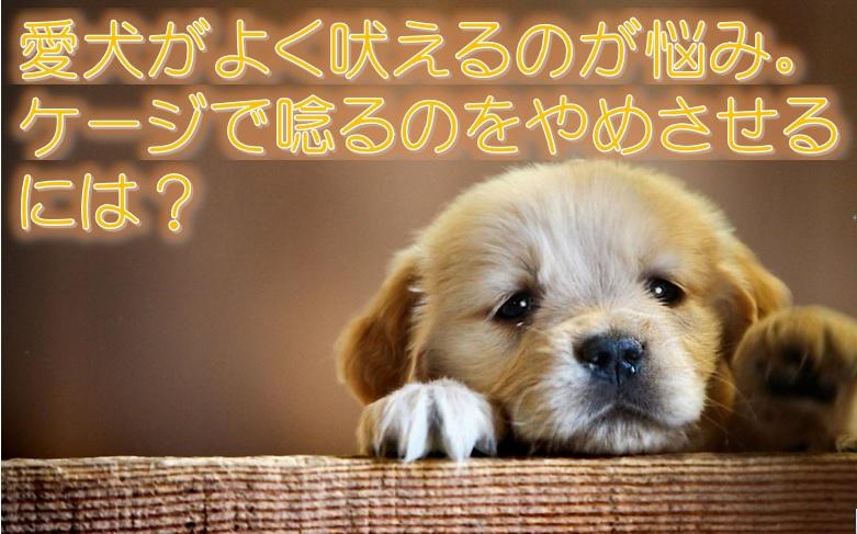 愛犬がよく吠えるのが悩み。 ケージで唸るのをやめさせるには?