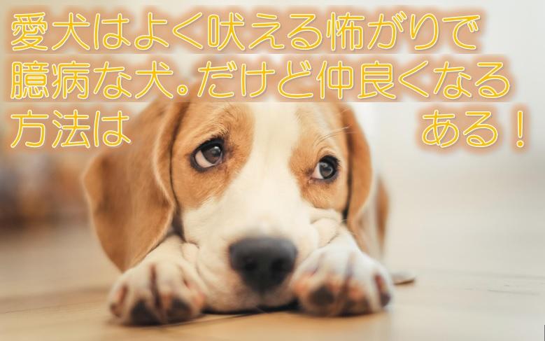 愛犬はよく吠える怖がりで臆病な犬。だけど仲良くなる方法はある!