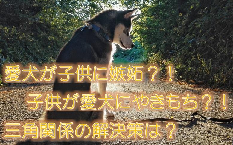愛犬が子供に嫉妬?!子供が愛犬にやきもち?!三角関係の解決策は?