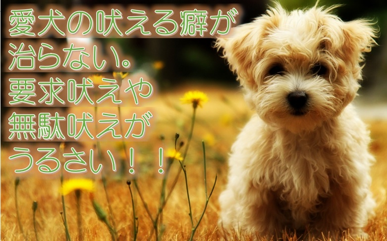 愛犬の吠える癖が治らない。要求吠えや無駄吠えがうるさい!!