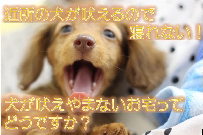 近所の犬が吠えるので寝れない!犬が吠えやまないお宅ってどうですか?