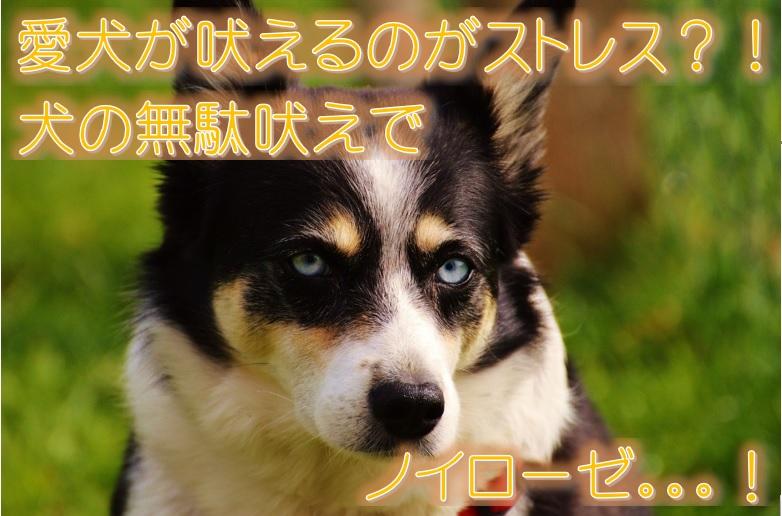 愛犬が吠えるのがストレス?!犬の無駄吠えでノイローゼ。。。