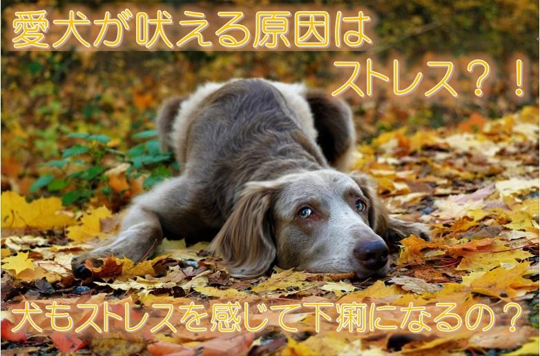 愛犬が吠える原因はストレス?!犬もストレスを感じて下痢になるの?