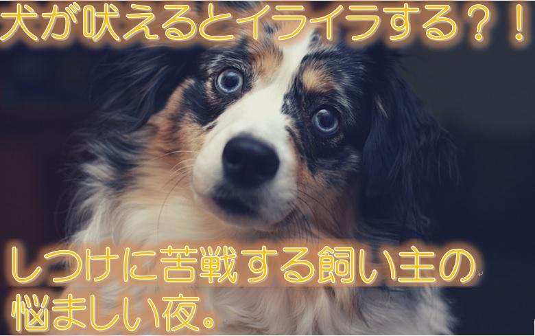 犬が吠えるとイライラする?!しつけに苦戦する飼い主の悩ましい夜。