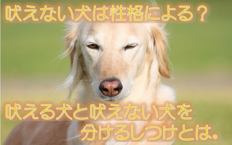 吠えない犬は性格による?吠える犬と吠えない犬を分けるしつけとは。