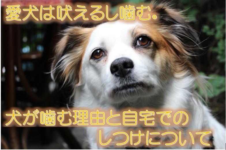 愛犬は吠えるし噛む。犬が噛む理由と自宅でのしつけについて