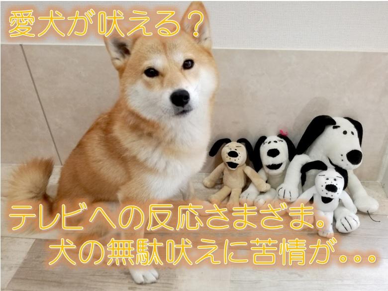 愛犬が吠える?テレビへの反応さまざま。犬の無駄吠えに苦情が。。。