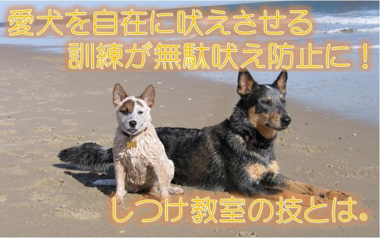 愛犬を自在に吠えさせる訓練が無駄吠え防止に!しつけ教室の技とは。