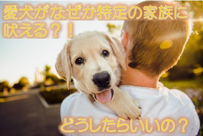 愛犬がなぜか特定の家族に吠える?!どうしたらいいの?