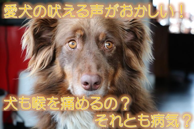 愛犬の吠える声がおかしい!犬も喉を痛めるの?それとも病気?