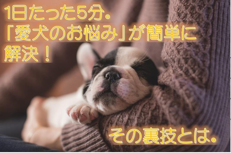 1日たった5分。「愛犬のお悩み」が簡単に解決!その裏技とは。